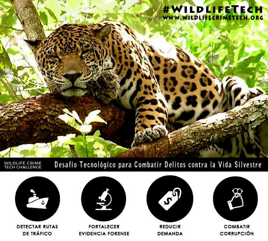 Poster: Desafío Tecnológico para combatir delitos contra la Vida Silvestre